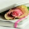 Capelli e poesia